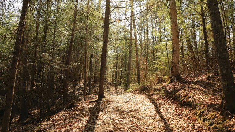 Scenic Raven Trail
